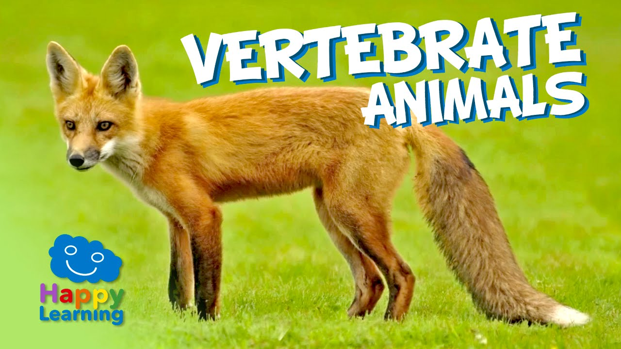 Animal Classification (examples [ 720 x 1280 Pixel ]