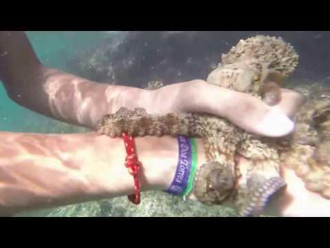 Como pescar un pulpo con las manos