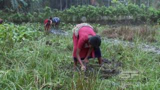 Close up view of girl working in fields with hoe