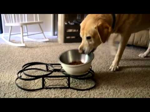 "DOG FAIL ""Bentley cant win today, all he wants to do is eat some food"""