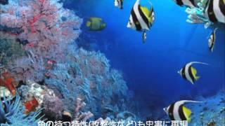 DigiFish Aqua Real 2 (デジフィッシュ アクアリアル 2) スクリーンセーバー