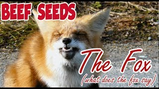 Ylvis - The Fox (What Does The Fox Say) (OFFICIAL Beef Seeds Cover)