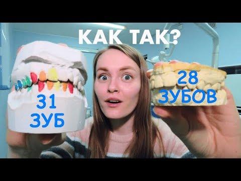 Сколько зубов у человека? 32? Вы уверены?!
