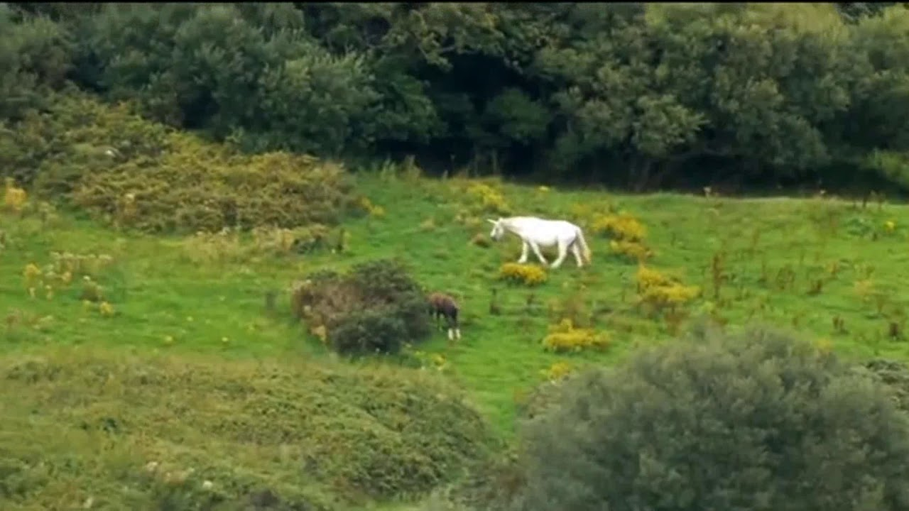 Unicorn Sighting - YouTube  Unicorn Sightin...