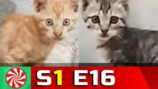 Funny Cat Videos for Kids | S1-EP16 | Time Pass || Capture Candy Kids TV