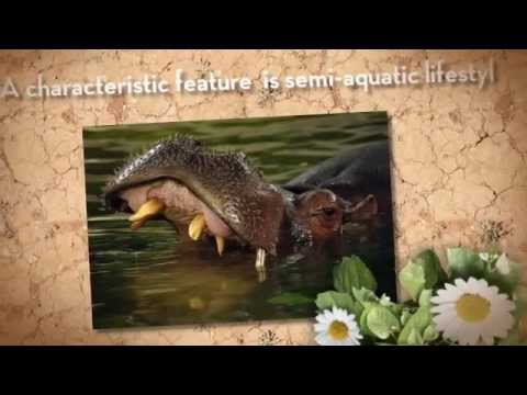 Interesting facts about the life of Hippos - YouTube
