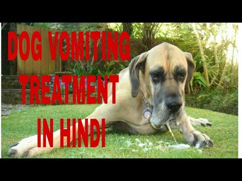 Pet care ! Dog vomiting treatment in Hindi ! Dog ultimate care