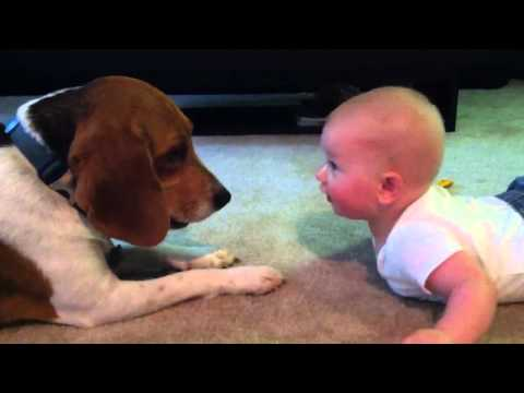 Baby vs Beagle