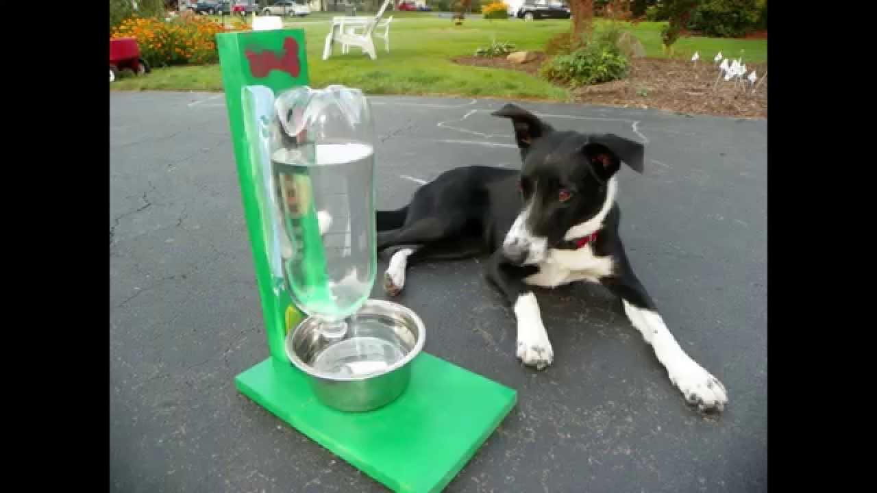 C mo hacer un recipiente bebedero que se autorellena for Dispensador de comida para perros