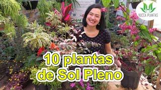 10 Lindas Plantas de Sol Pleno