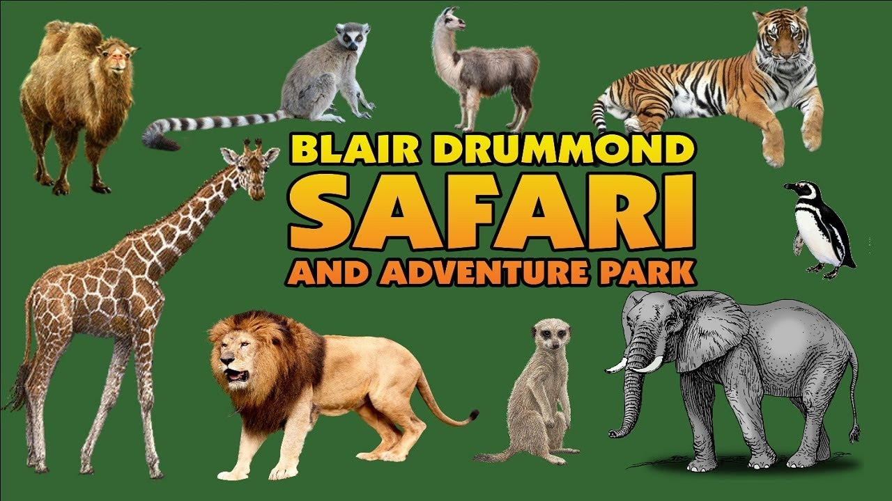 Image result for blair drummond