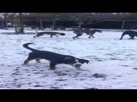robbie vip dog park