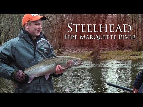 Steelhead on the Pere Marquette River