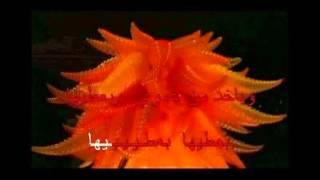 Arabic Karaoke ya rayt fiyeh khabiha Ragheb