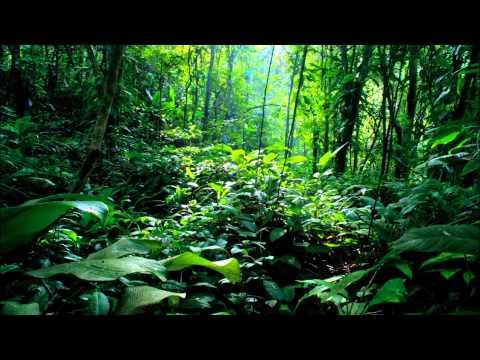 Rainforest (Smooth Jazz Version) - Paul Hardcastle [HD]