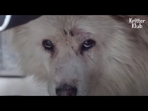 Every Night, A Dog Secretly Escapes From Home To Search For His Missing Friend..   Kritter Klub