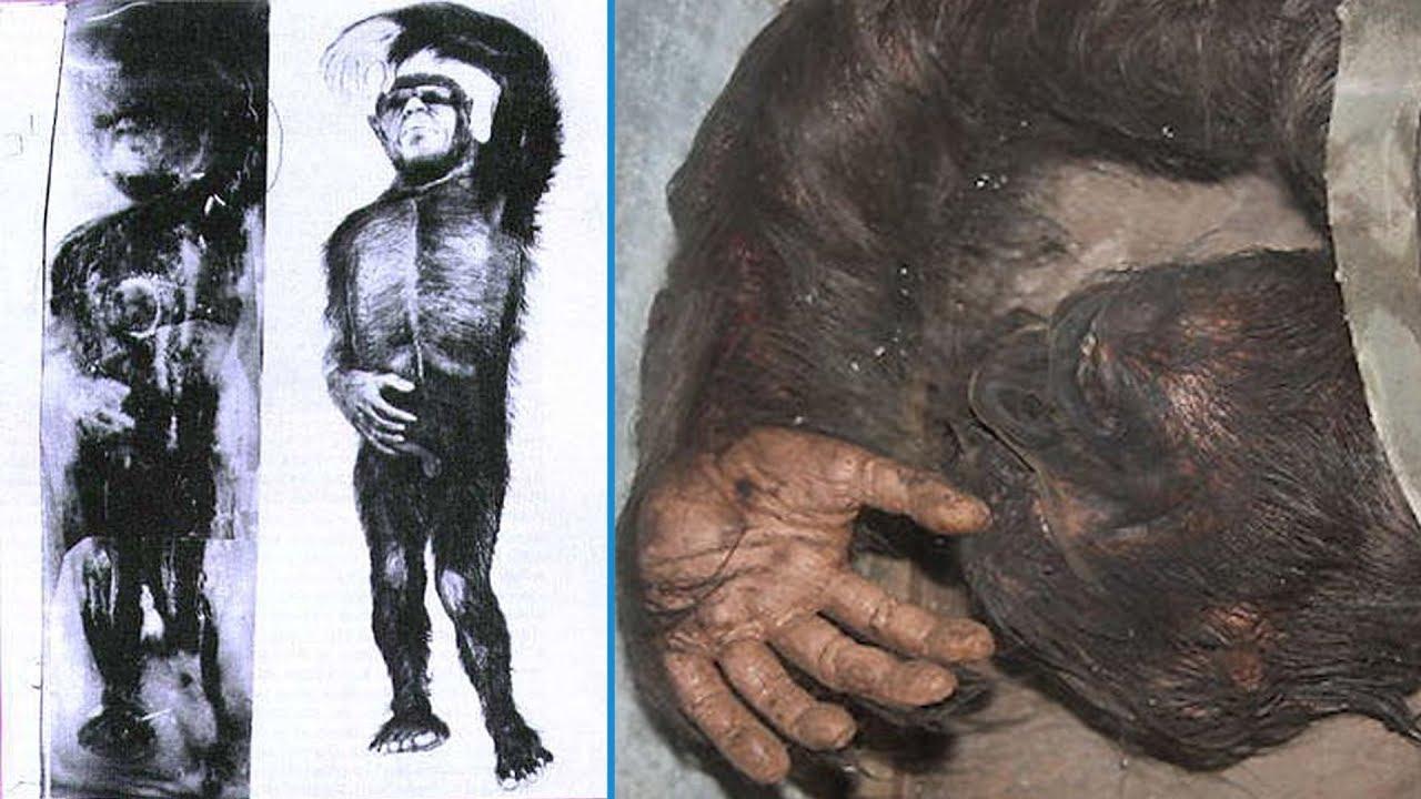 5 Strange Creatures Found Frozen in Ice