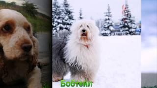 Средние породы собак 1 часть