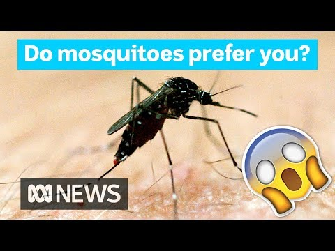 Why mosquitoes bite some people more than others | Did You Know?