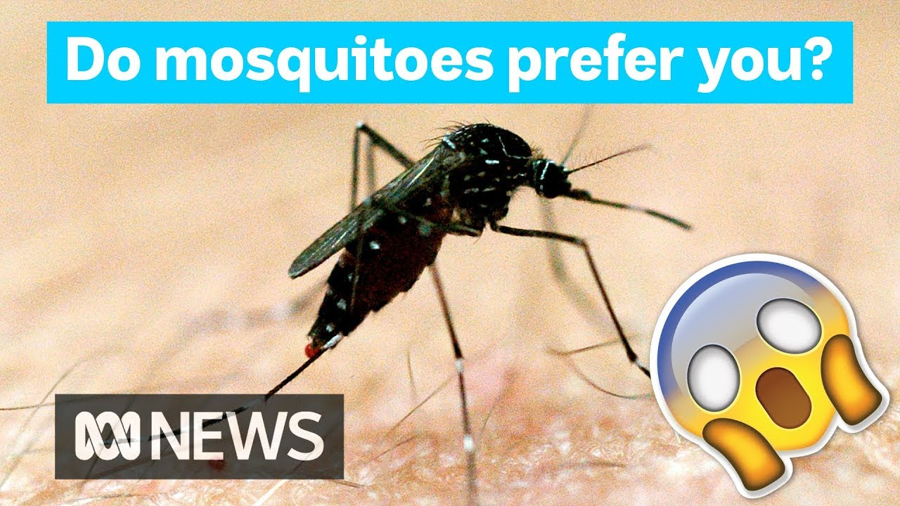 Feel Like You Re A Mozzie Magnet Mosquitoes Really Do Prefer To