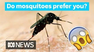 Why Mosquitoes Bite Some People More Than Others  Did You Know