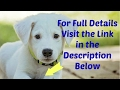 Best Dog Food For Dogs With Yeast Infections 2017