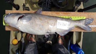 Kayak Catfishing | Competing in a Kayak Fishing Tournament
