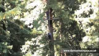 Redwoods zipline tours and outdoor holidays in Santa Cruz California