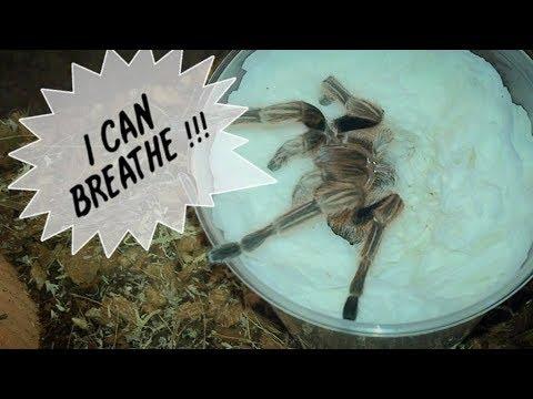 Tarantula Unboxing ~ AFTER 2 HOURS !!!