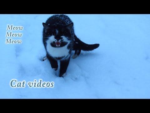 Meow cat videos