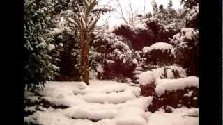 Une Rose sous la Neige