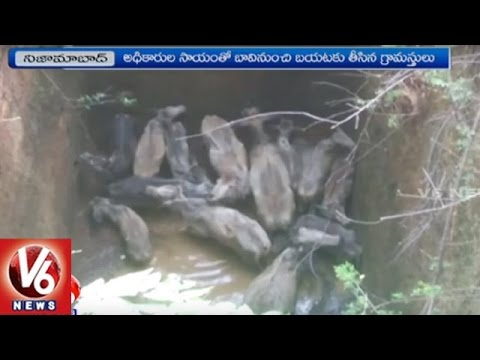 Cheetah Attacks On Herd Of Cows   Forest Officers Rescued   Nizamabad   V6 News