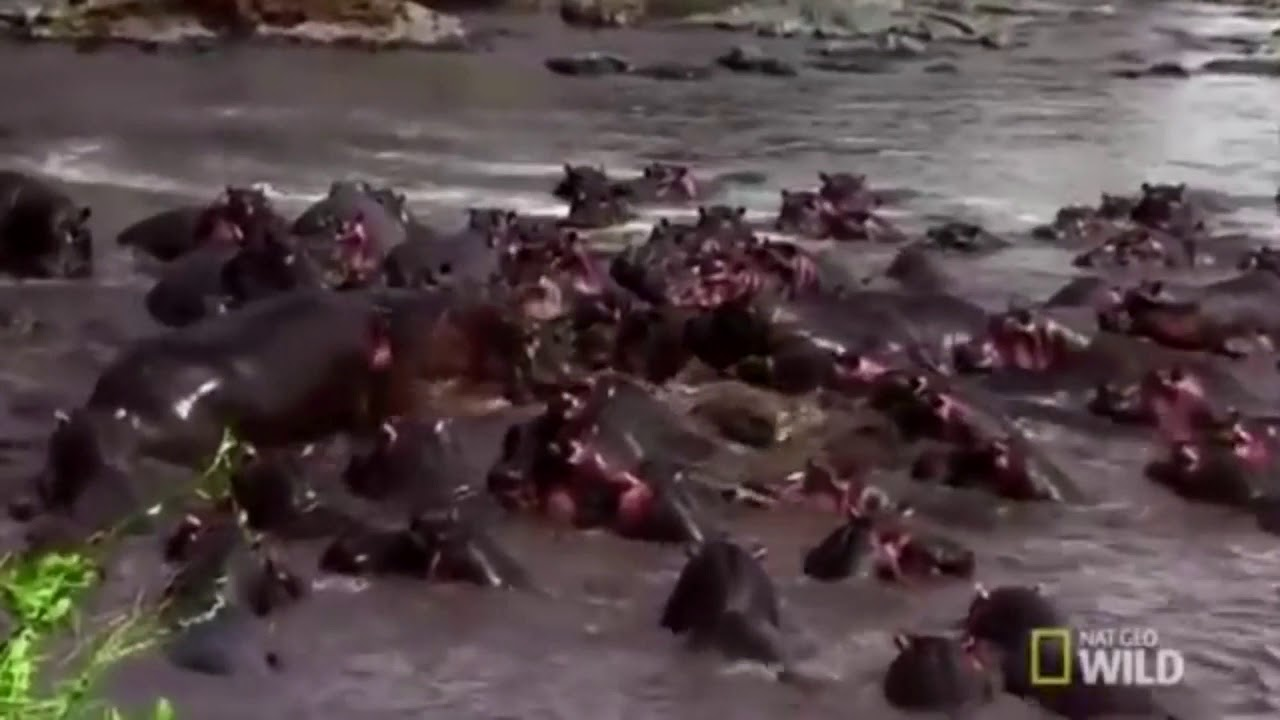 Interior Crocodile Alligator - YouTube