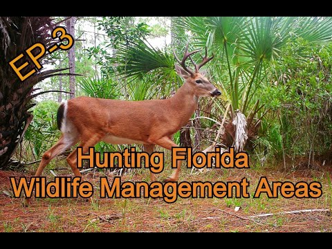 Hunting Florida Wildlife Management Areas, Episode 3