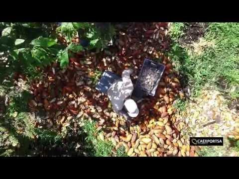 Cacao Export S.A. Video Corporativo Caexportsa