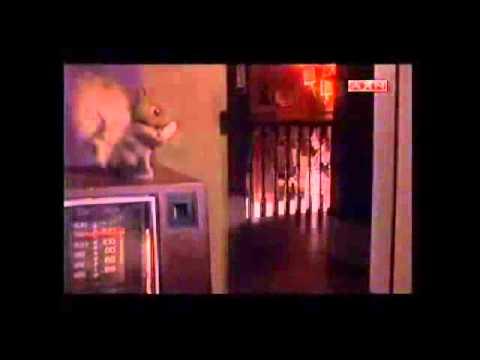Trailer do filme Colheita Maldita 4