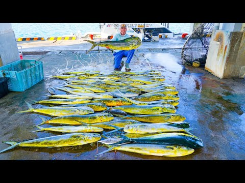 The TRUTH About Fishing In Japan