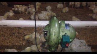 Pemanas ayam broiler menggunakan kompor oli bekas.(trial#1)
