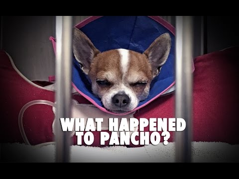 What Happened To Pancho?