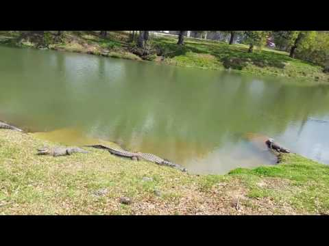 Alligator Charlie and family - North Charleston, SC