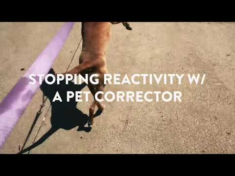 Stop Dog Reactivity NOW Using A Pet Corrector