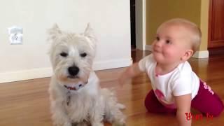 Вестики и Малыши - заботливые, игривые и внимательные друзья