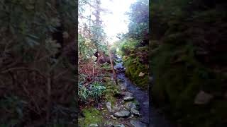 Cardiac Hill---Killarney National Park(Ireland)(2)