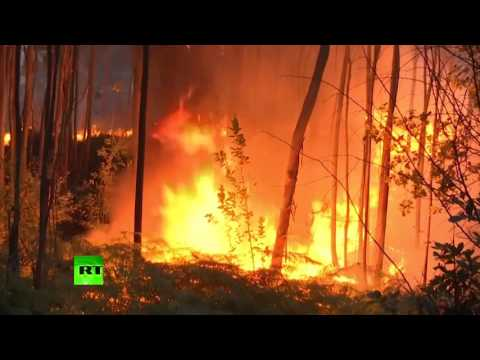 Raging blaze: Death toll rising as major forest fire sweeps through Portugal