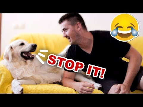 Funny Dog Reacts to My Laugh [BEST REACTION EVER]