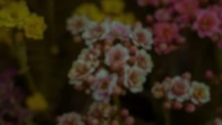 Unforgettable - Nat King Cole Subtitulada en Español