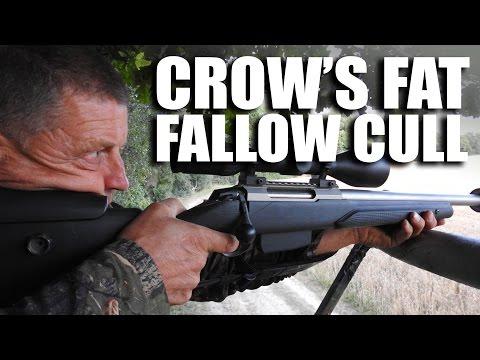 Crow's Fat Fallow Cull