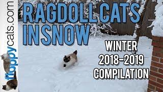 Ragdoll Cats in Snow - Winter 2018-2019 Compilation - ねこ - ラグドール - = ネコ - Floppycats