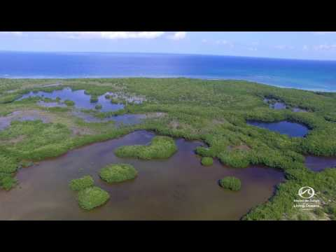 Jamaican Mangroves from Above
