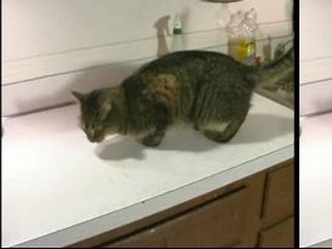 how to keep kittens off counters